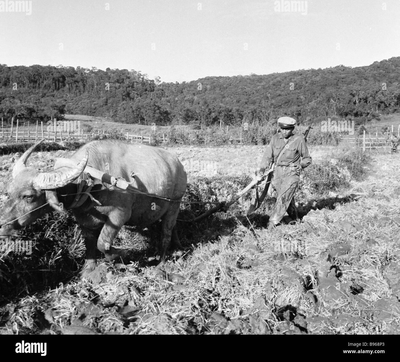 Un contadino armato lavora nel settore del riso Immagini Stock