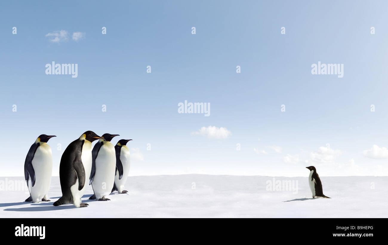 Adelie pinguini si trova di fronte a un gruppo di pinguini imperatore Immagini Stock