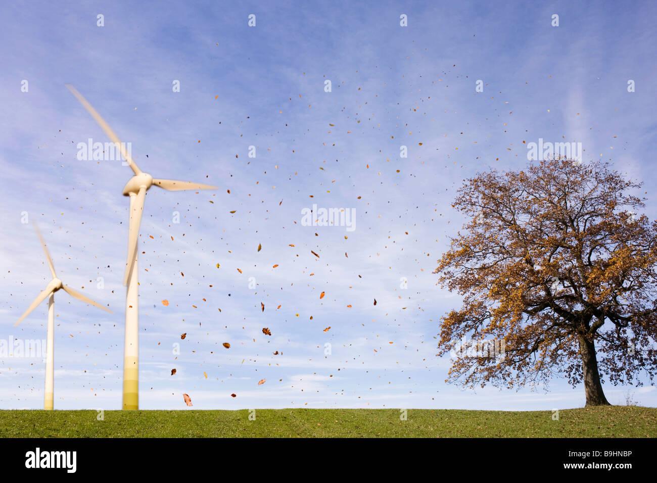 Foglie che cadono, albero, le turbine eoliche Foto Stock