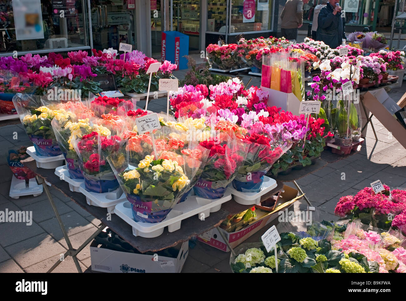 Pressione di stallo di mercato la vendita di piante e fiori in Devizes in marzo in anticipo delle madri di giorno Immagini Stock