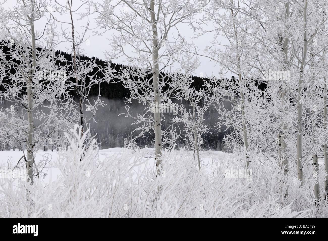 Alberi e cespugli coperto di brina in corrispondenza di lanca piegare sul fiume Snake contro segnale scuro montagna nel parco nazionale di Grand Teton Wyoming usa Foto Stock