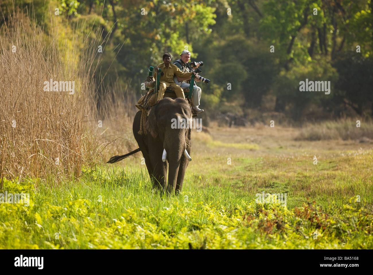 I turisti con teleobiettivi cavalcata su un elefante per via tigri nel Bandhavgarh Parco Nazionale di Madhya Pradesh Immagini Stock