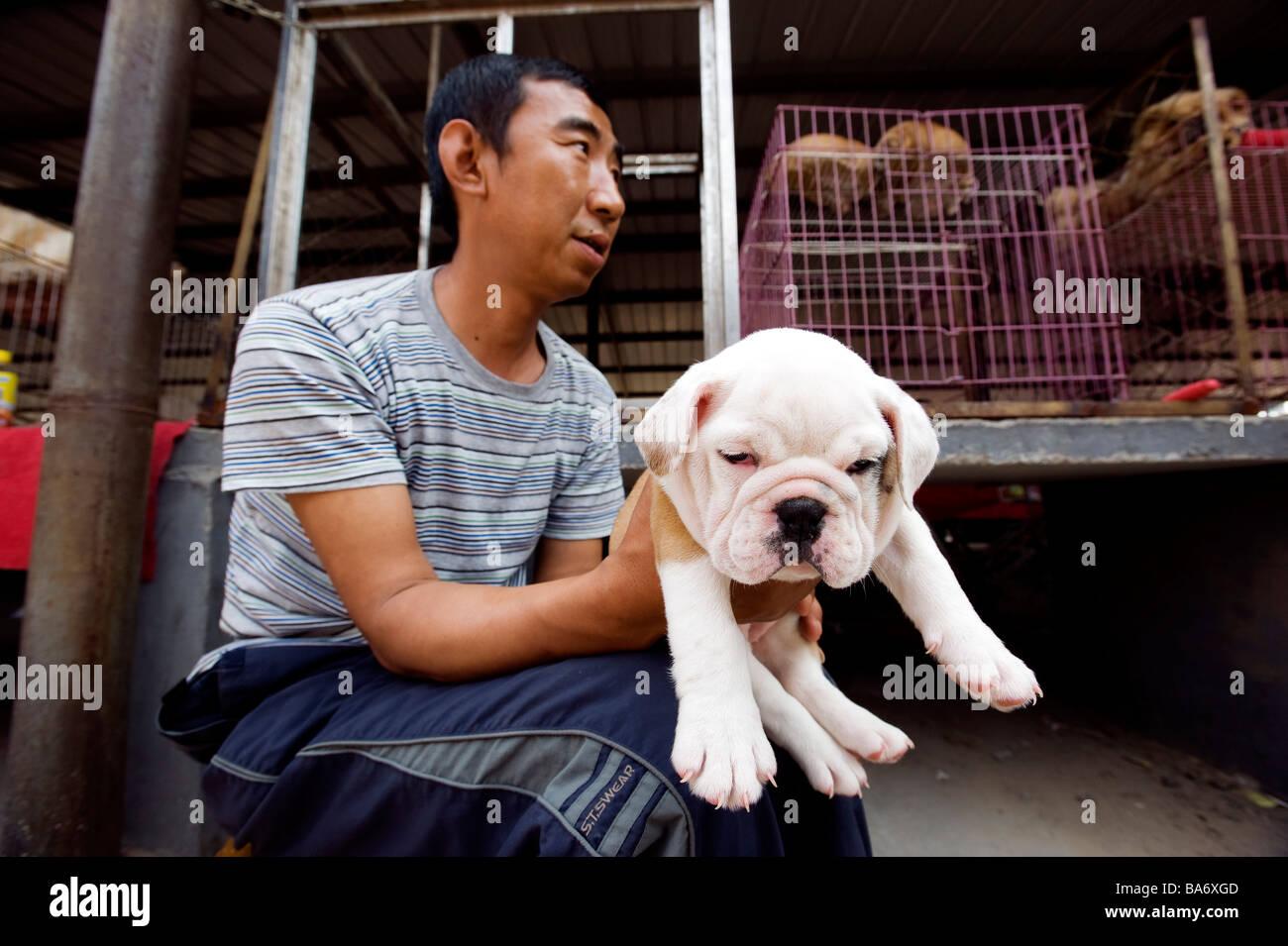 Cina, Pechino, Dong Feng Xin mercato del cane Immagini Stock