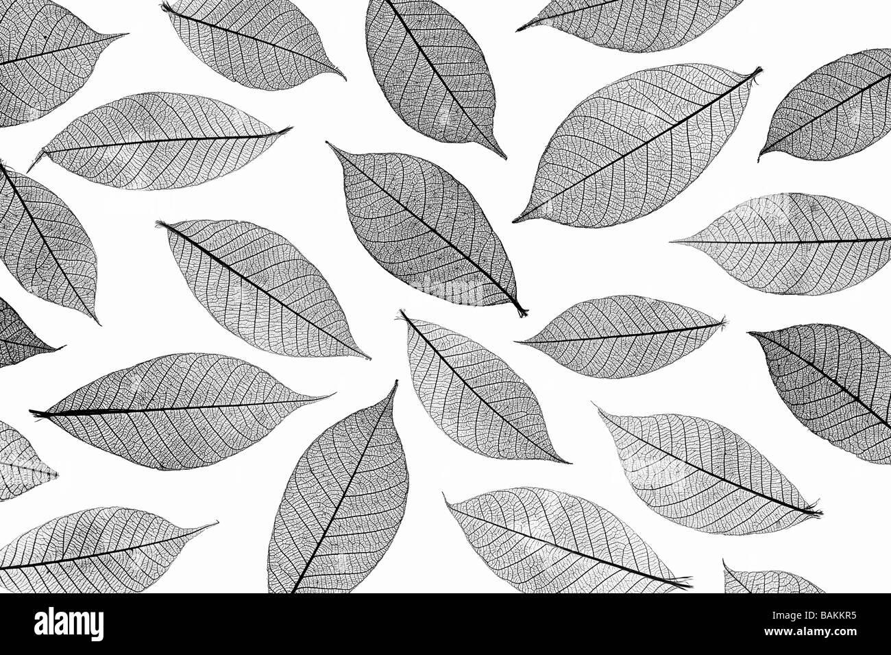 Foglie di scheletro di pattern. In bianco e nero Immagini Stock