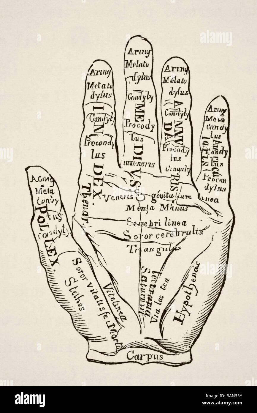 Campione della mano sinistra con le linee e le loro confessioni horoscopic. Immagini Stock