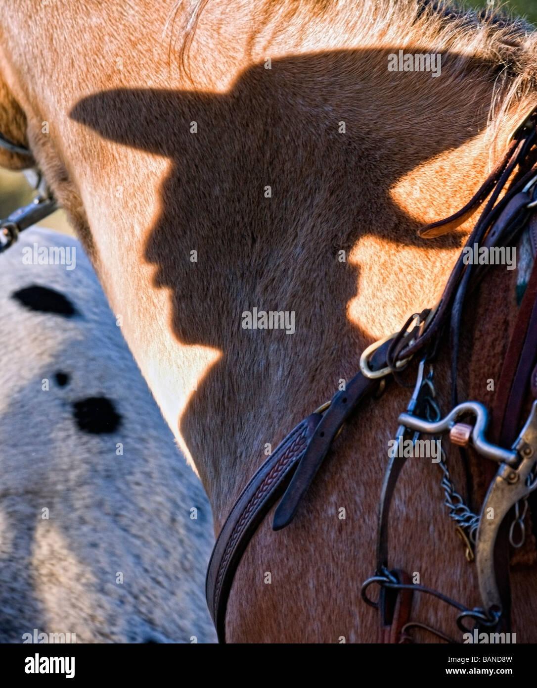 Ombra di un cowboy a cavallo Foto Stock