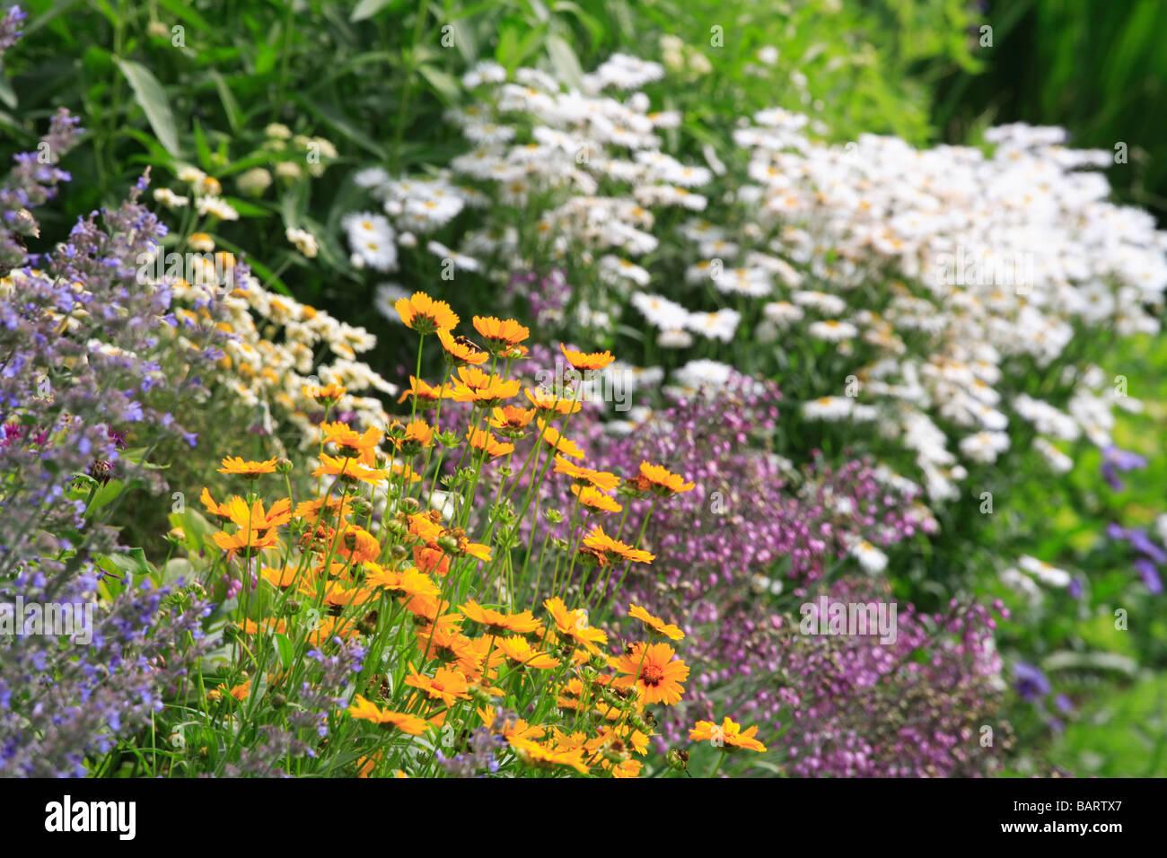 """Estate fiore di """"frontiera"""" bianco arancione viola e azzurro fiori Foto Stock"""