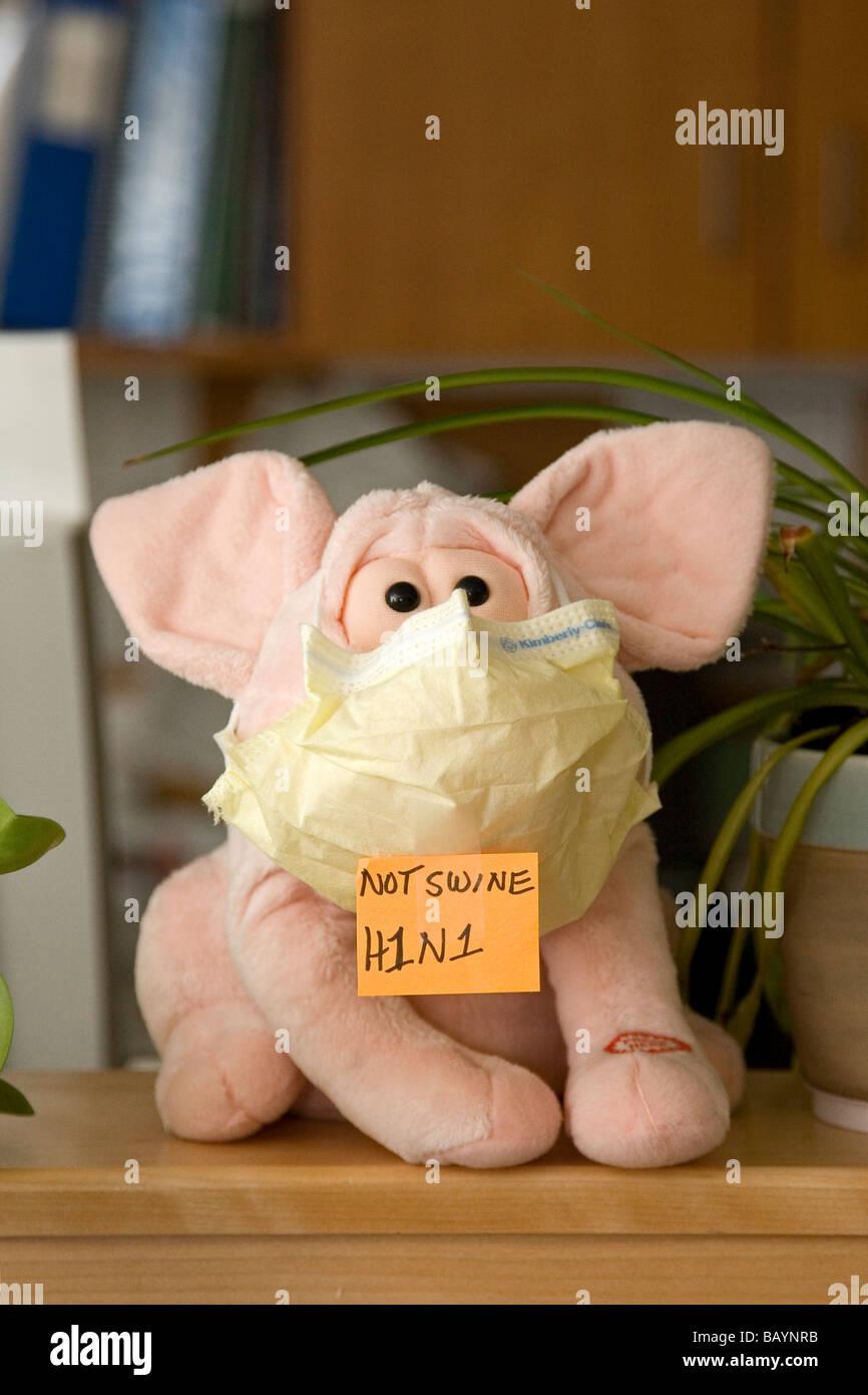 Un maiale farcito indossa una maschera e un segno che dichiara l'influenza suina devono essere chiamato H1N1. Immagini Stock