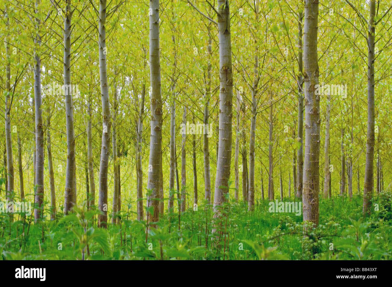 Foresta di primavera Immagini Stock