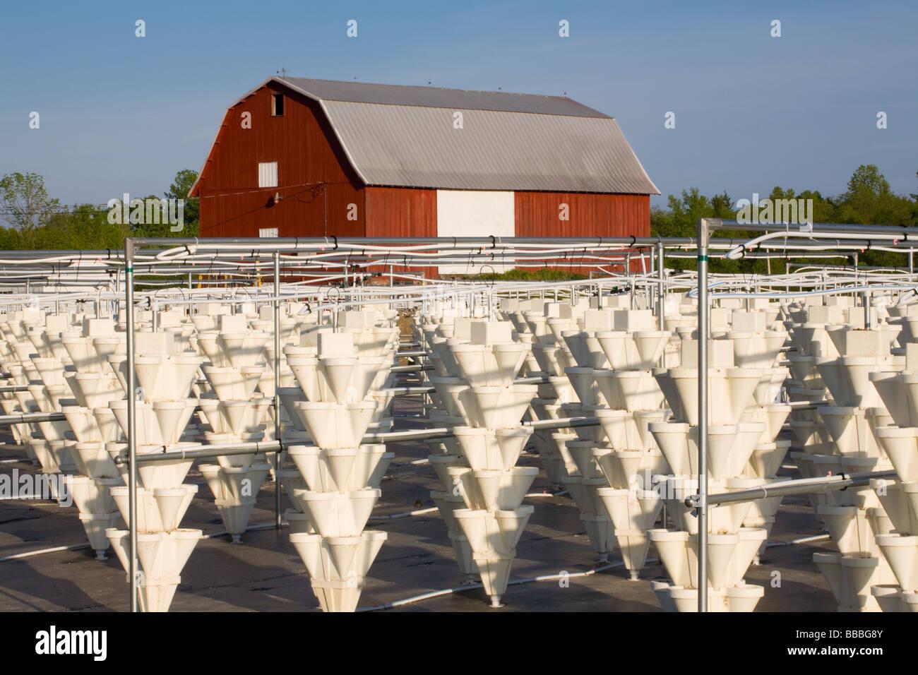 Agricoltura idroponica fragole crescente vicino Skaneateles New York Onondaga County Regione dei Laghi Finger Immagini Stock