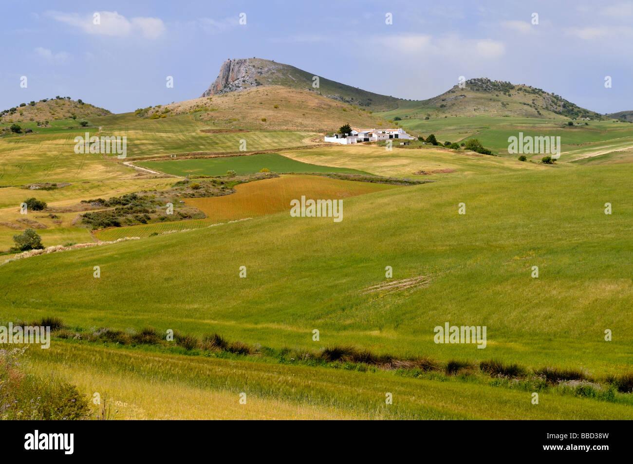 Campagna di Andalusia Spagna vicino a Teba Immagini Stock