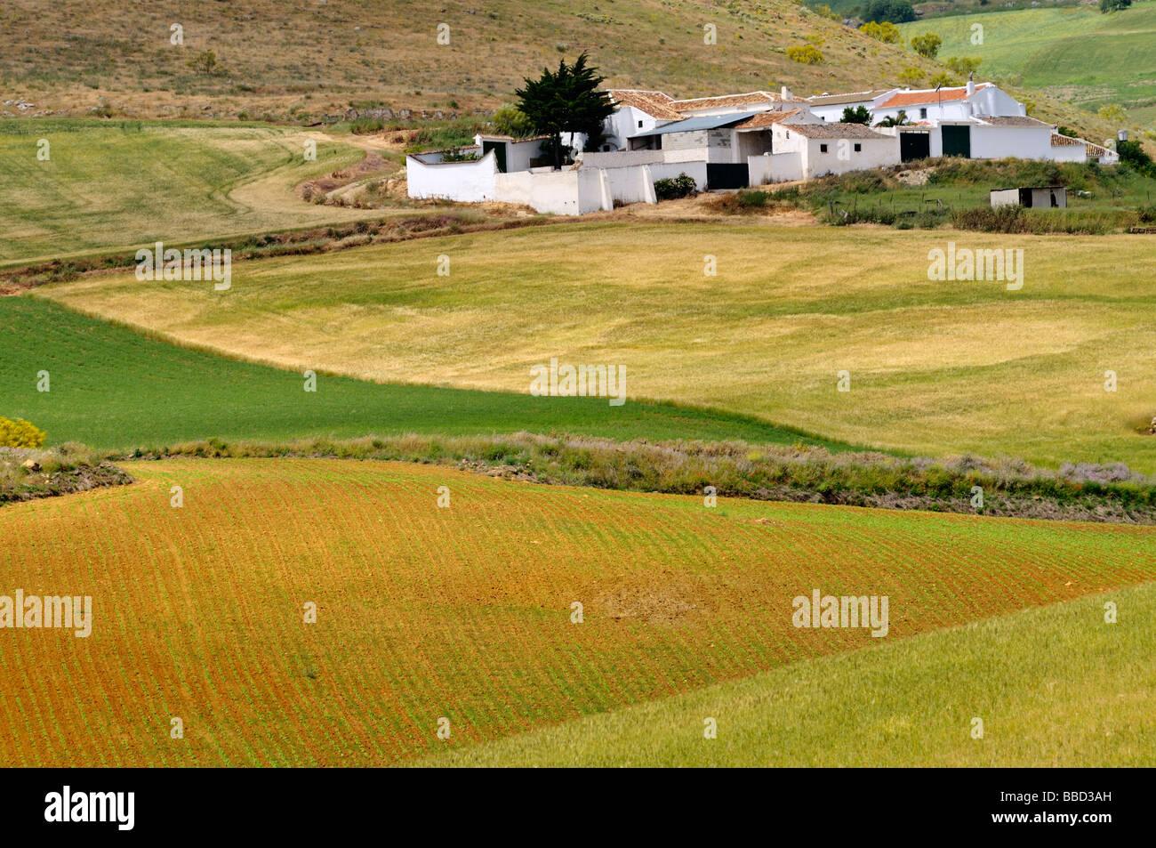 Case bianche campagna di Andalusia Spagna vicino a Teba Immagini Stock