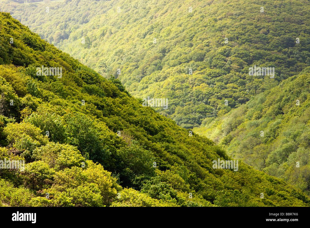 Una valle boscosa tra Heddons bocca e cacciatori Inn on the North Devon Coast UK Immagini Stock