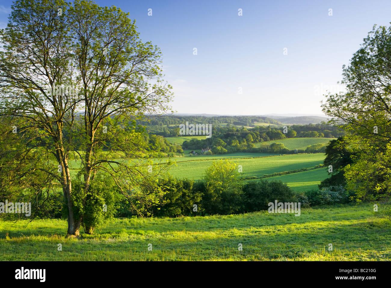 Vista sud da North Downs a Newlands Corner, Surrey, Regno Unito Immagini Stock