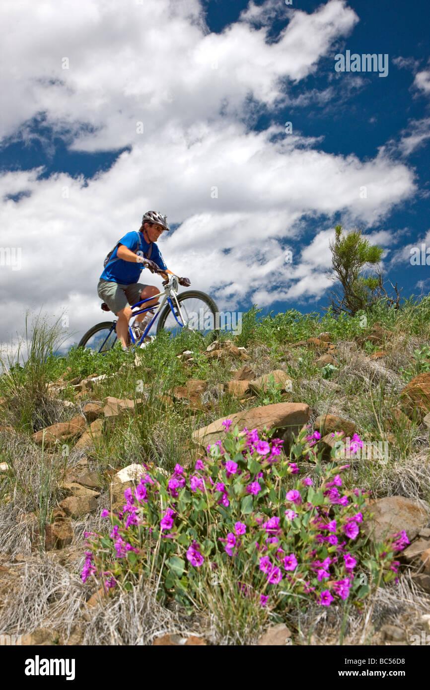 Ciclista competere nel Fibark Mountain Bike Race sulla montagna Tenderfoot Salida Colorado USA Immagini Stock