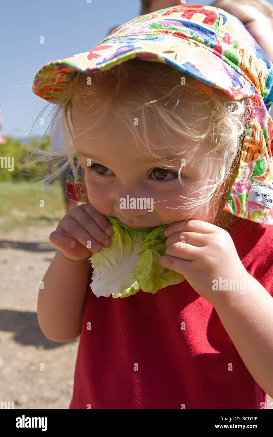 Due anni di vecchia ragazza mangiare lattuga durante una mano fattorie tour organico. Immagini Stock