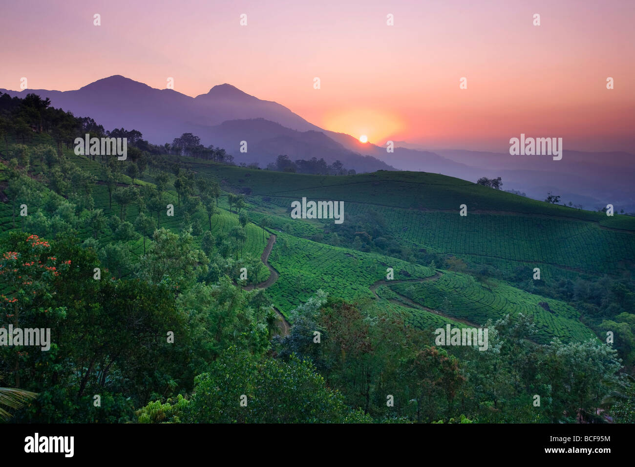 Le piantagioni di tè, Munnar, i Ghati Occidentali, Kerala, India Immagini Stock