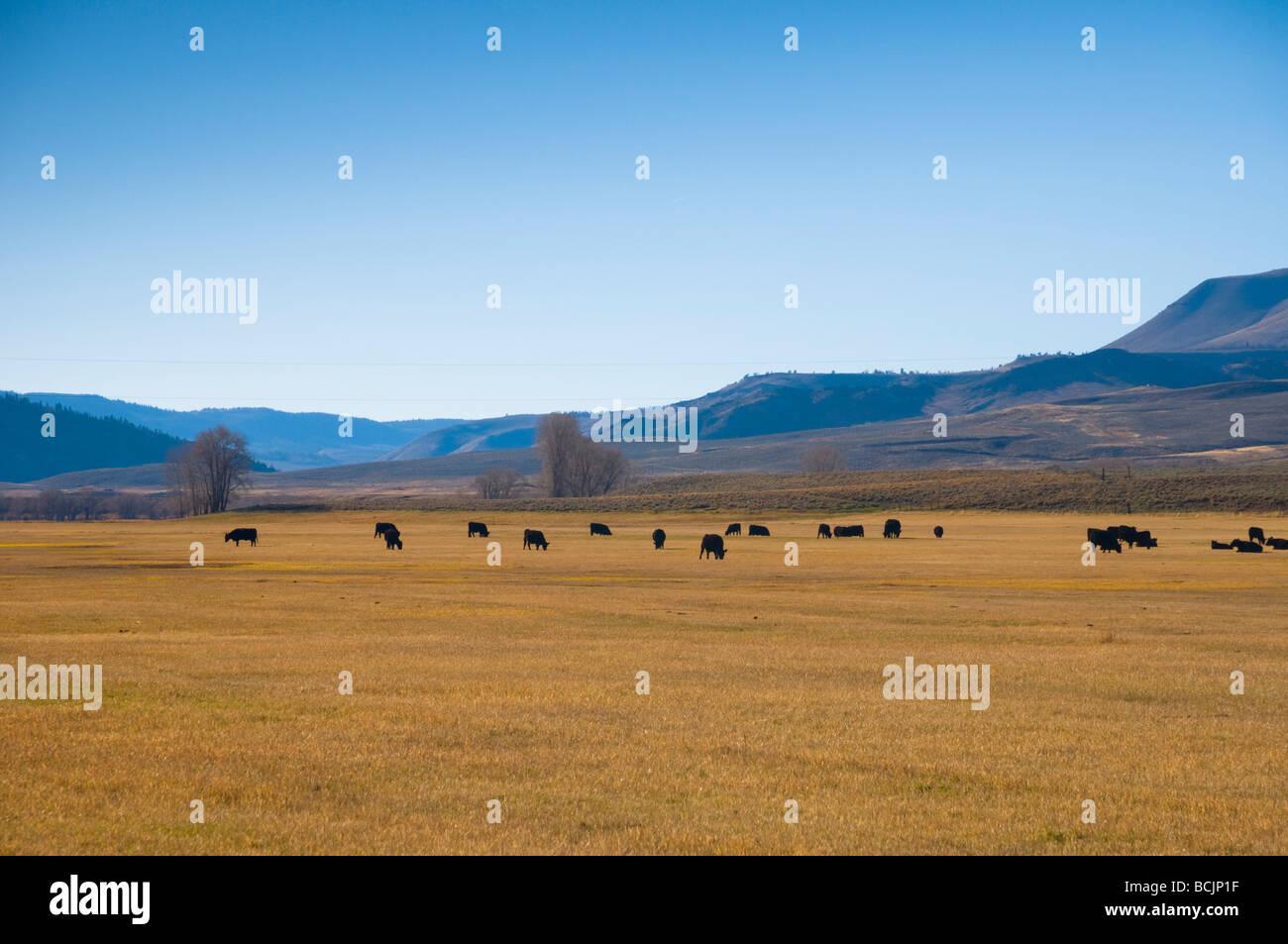 Stati Uniti d'America, Colorado, campi Immagini Stock