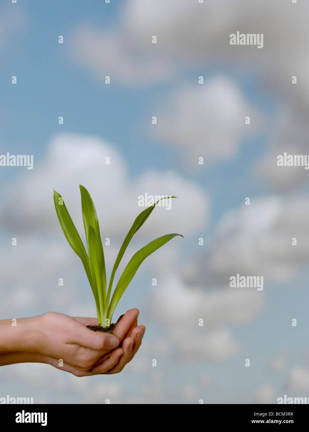 Mani tenendo il suolo e pianta contro un cielo sfondo Immagini Stock