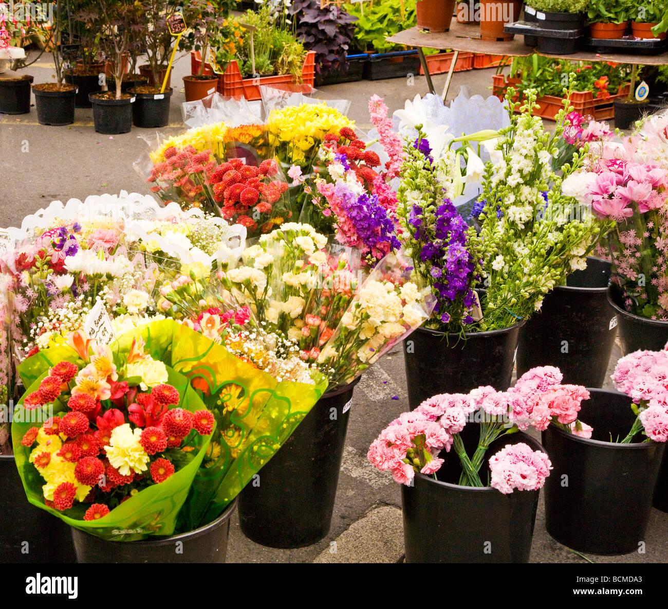 Un fiore in stallo il giovedì farmer s market nel tipico mercato inglese comune di Devizes Wiltshire, Inghilterra Foto Stock