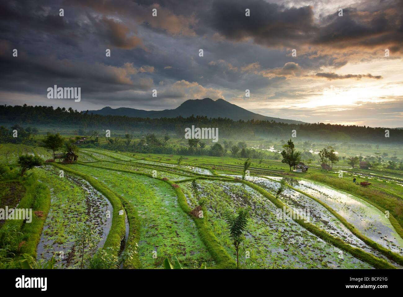 Campi di riso terrazzati vicino Tirtagangga all'alba con il sorgere del sole sopra il picco vulcanico di Gunung Immagini Stock