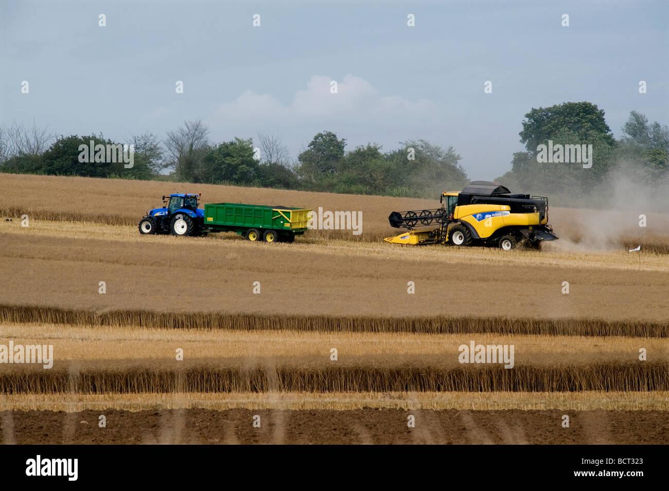 Agriturismo il Contadino Agricoltura Agricoltura Orzo Suffolk Bretagna Harvest mietitrebbia New Holland Immagini Stock