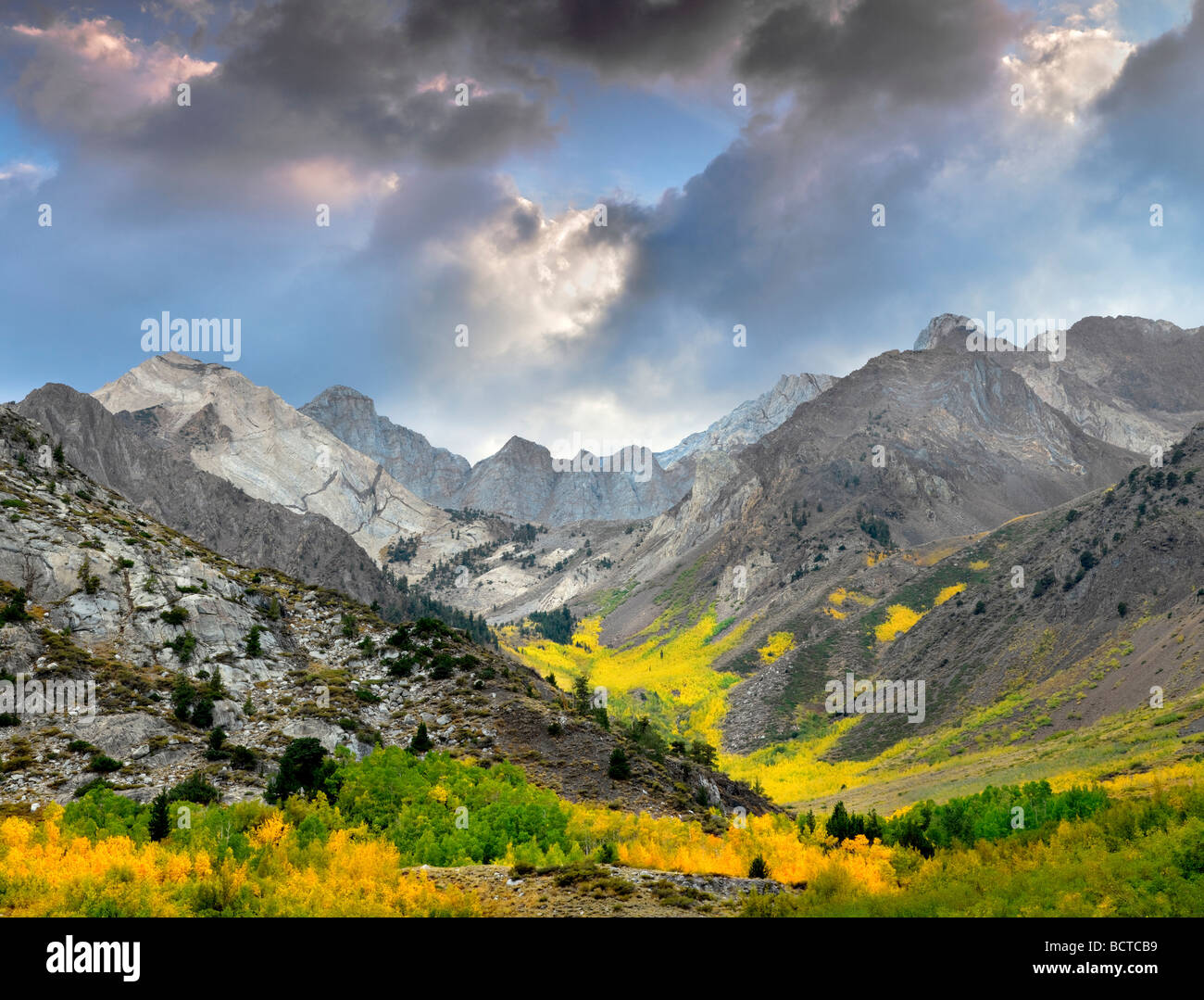 McGee Creek Canyon con fall aspens colorati di Inyo National Forest in California Immagini Stock