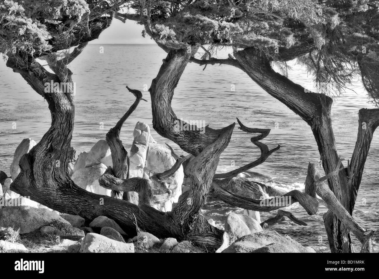 Monterey cipressi e ocean 17 Mile Drive Pebble Beach in California Immagini Stock