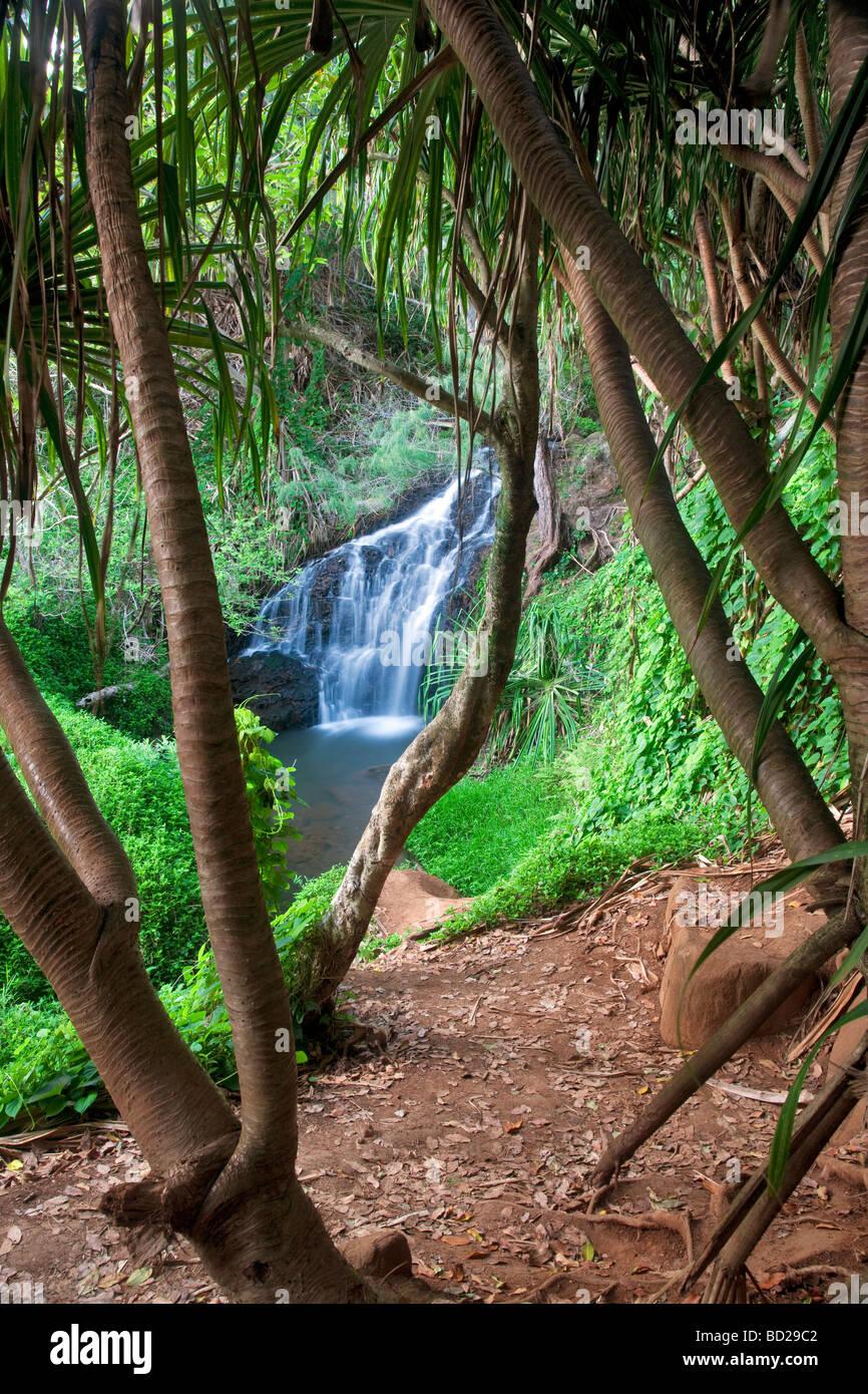 Parte superiore della Regina nella vasca scende Kauai Hawaii Immagini Stock