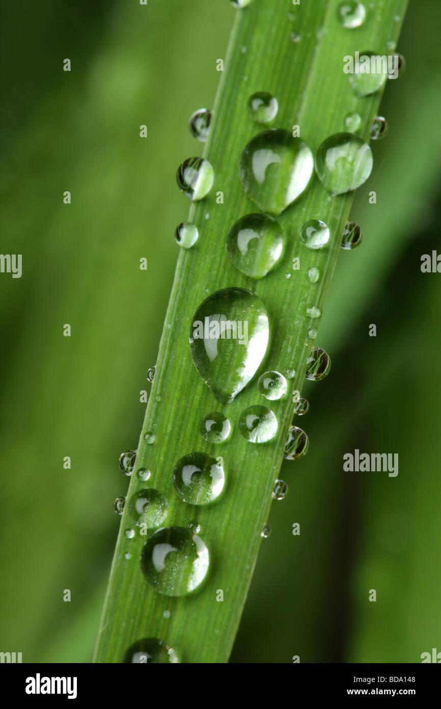 In prossimità della pianta con le goccioline di acqua Immagini Stock