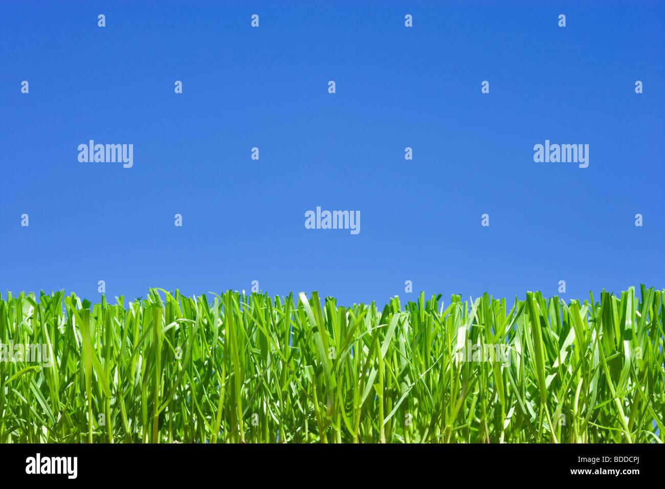 Il taglio di erba, angolazione bassa pianura contro il cielo blu Immagini Stock