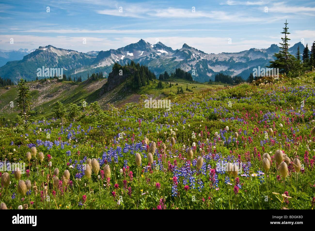 Fiori Selvatici in prato e vista di Tatoosh spaziano dalla Skyline Trail nel paradiso area; il Parco Nazionale del Immagini Stock