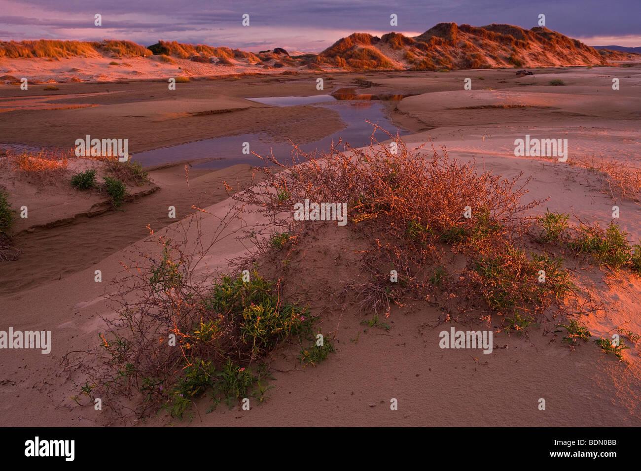 Le luci del tramonto bagna l Oceano dune a Pismo State Beach, California, Stati Uniti d'America. Immagini Stock