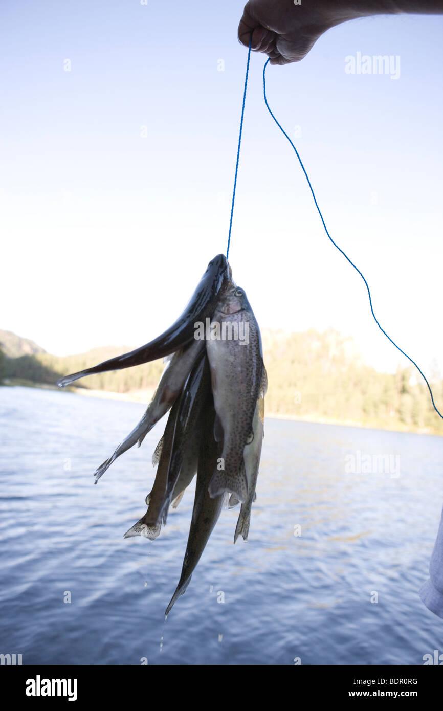 Per le trote fresche catturati in un lago da pescatori, tenendo in mano la sua cattura nella parte anteriore dell'acqua Foto Stock
