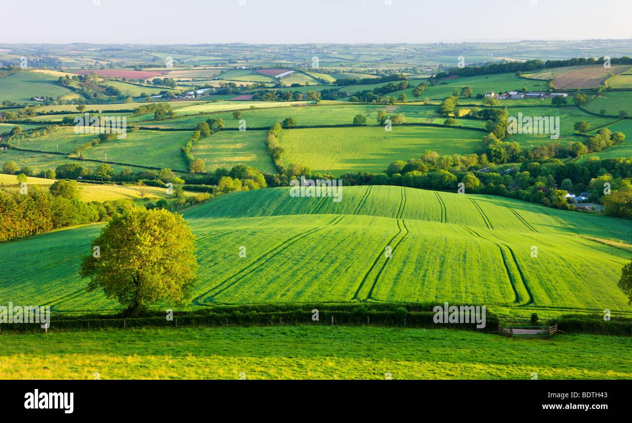 Inglese rurale estate scene di campagna vicino a Stockleigh Pomeroy, Devon, Inghilterra. Per il periodo estivo (Giugno) Immagini Stock
