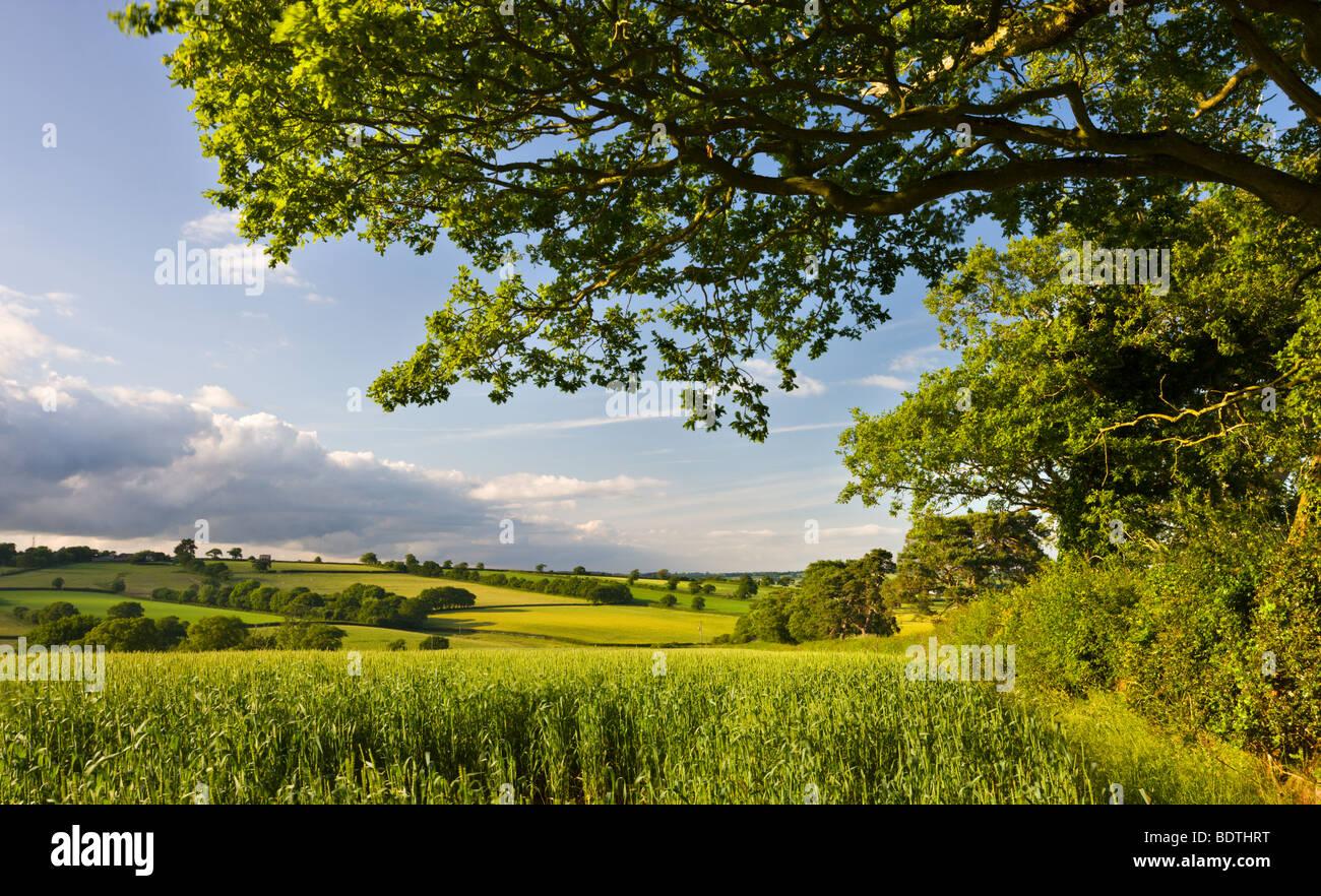 Estate campo di coltivazione e le colline nei pressi di Broomhill, metà Devon, Inghilterra. Per il periodo Immagini Stock
