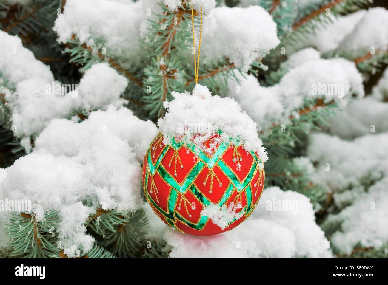 Albero di natale ornamento in coperta di neve bellezza Bush con bacche di colore viola. Immagini Stock