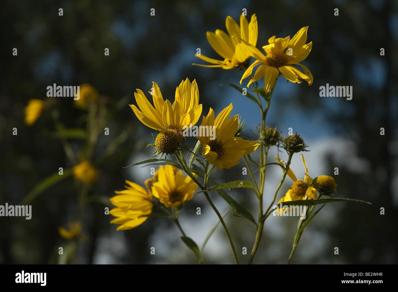 Fiori Di Campo Gialli.Fiori Di Campo Giallo Foto Immagine Stock 25879555 Alamy