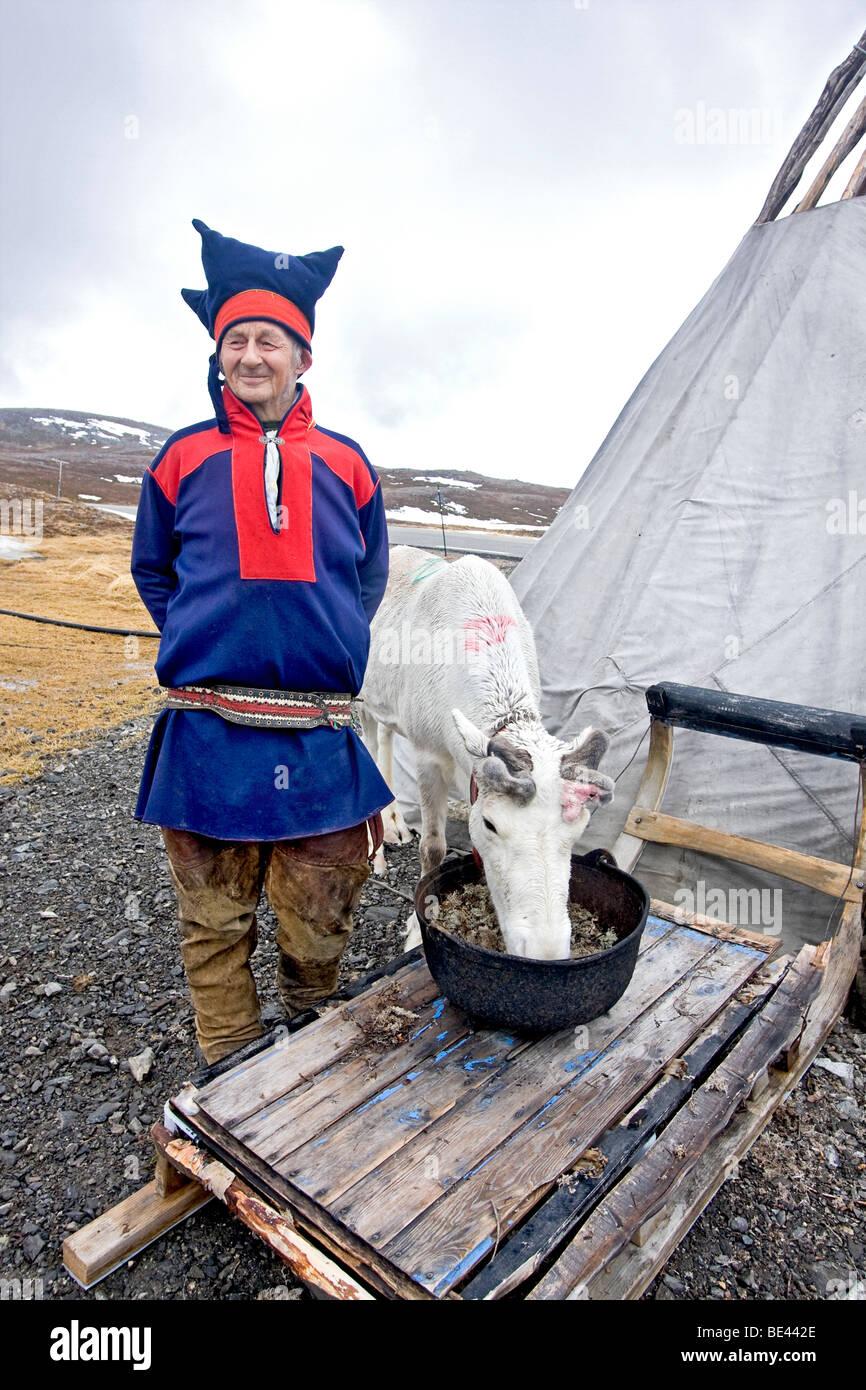 Sami anziani uomo in abbigliamento tradizionale si distingue per la sua tenda con una delle sue renne vicino alla Immagini Stock