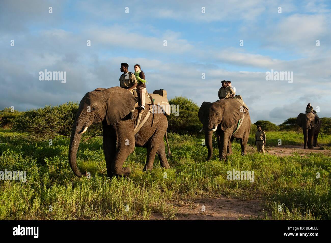 Elephant Back Safari, Kapama Game Reserve, maggiore parco nazionale Kruger, Sud Africa Immagini Stock