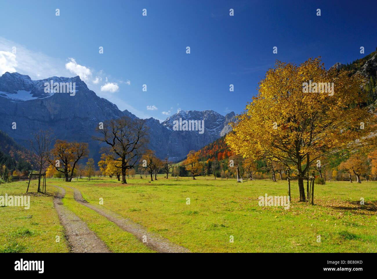 Via tra alberi di acero in autunno colori con vista Spritzkarspitze, Grosser Ahornboden, Karwendel, Tirolo, Austria Immagini Stock