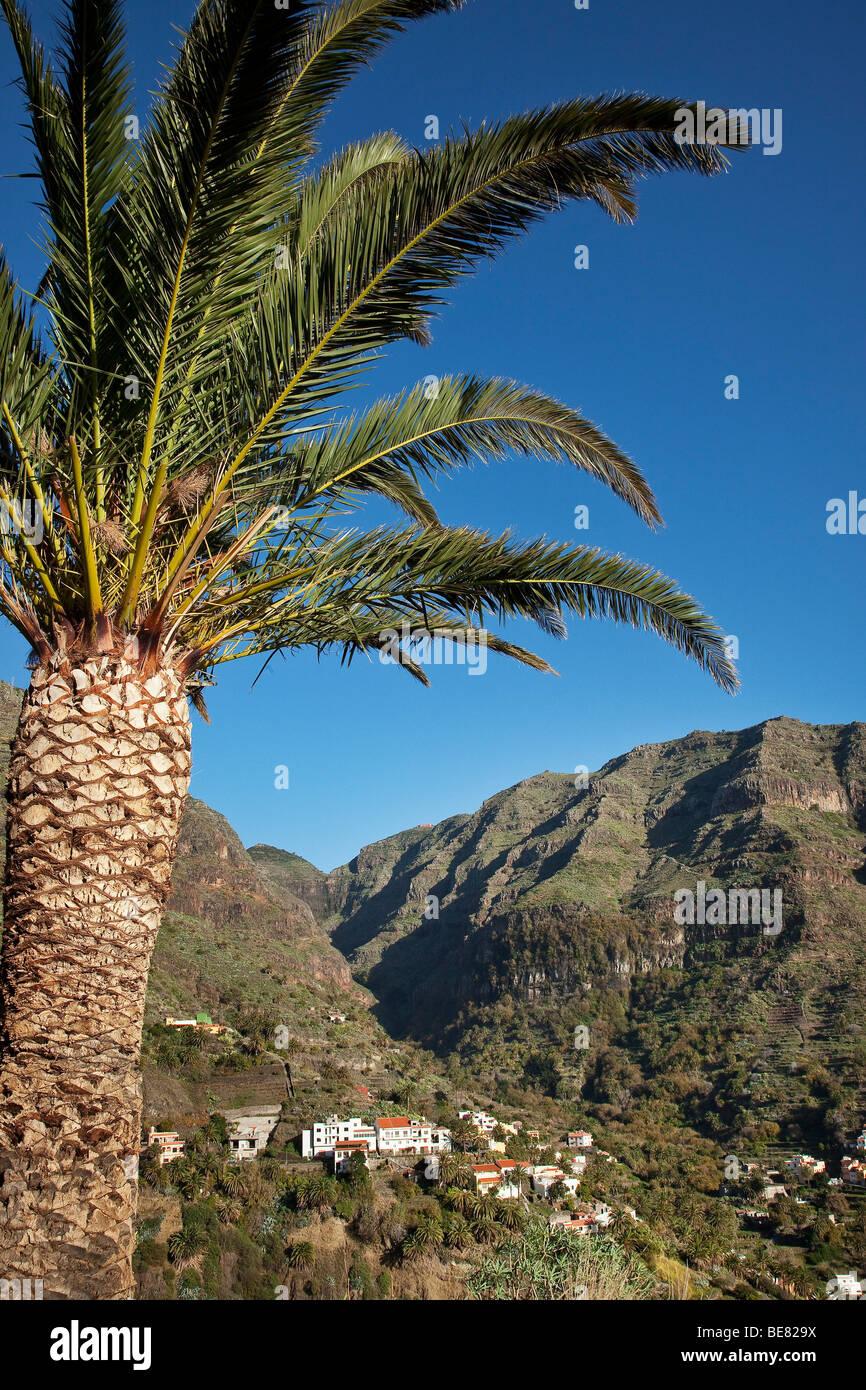 Palm Tree e Valle Gran Rey sotto il cielo blu, La Gomera, isole Canarie, Spagna, Europa Immagini Stock