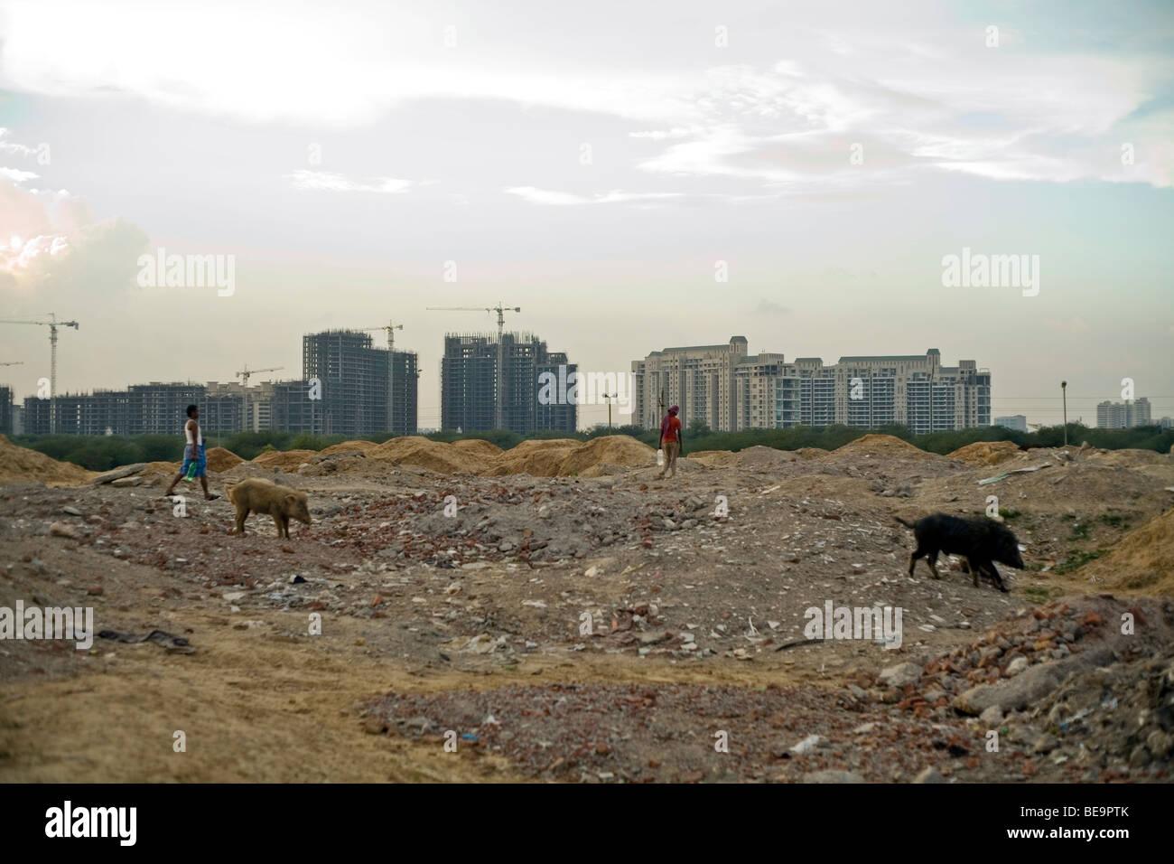 Uomini e maiali selvatici a piedi attraverso un campo di lavoro nell'ombra di un nuovo sviluppo a Gurgaon, India Immagini Stock