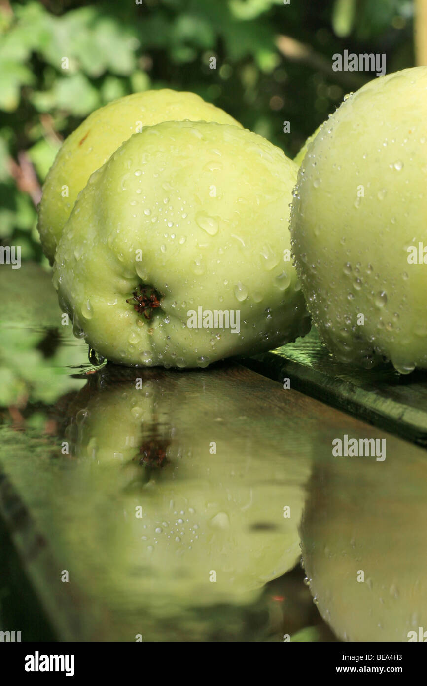 Appels op een houten tafel na een stortbui; le mele su un tavolo di legno dopo un acquazzone. Immagini Stock