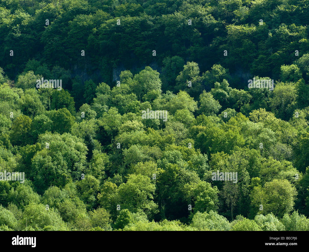 Alberi sulla banca del fiume Wye, Wye Valley, Gloucestershire Englans. Immagini Stock