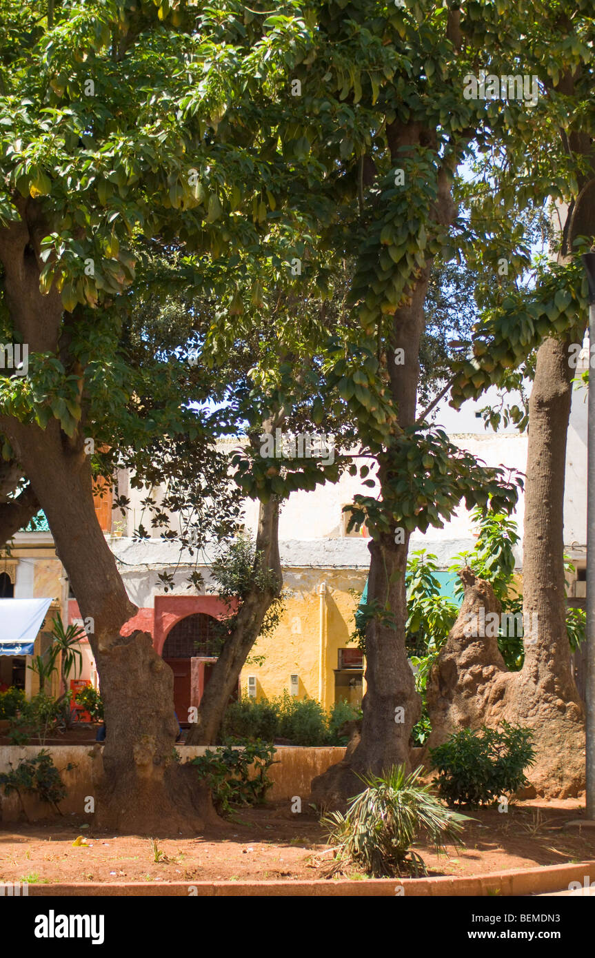 Casablanca in Marocco Immagini Stock
