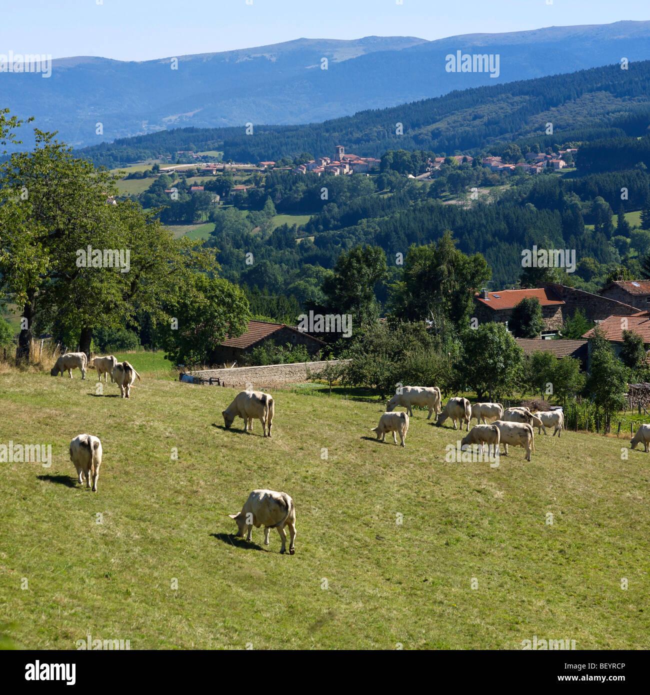 Parc naturel régional Livradois-Forez - Villaggio e la fattoria di st Amand Roche Savine, Auvergne, Francia. Foto Stock