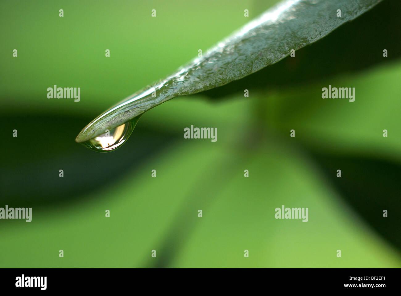 Foglia verde, pioggia caduta, acqua goccia goccia di rugiada, macro close-up ravvicinato, rugiada, pioggia, acqua, Immagini Stock