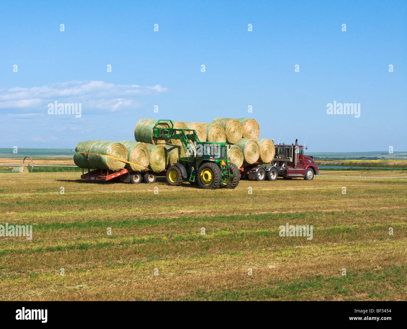 Agricoltura - Caricamento round alfalfa balle di fieno su un rimorchio di un trattore servendosi di un trattore Immagini Stock