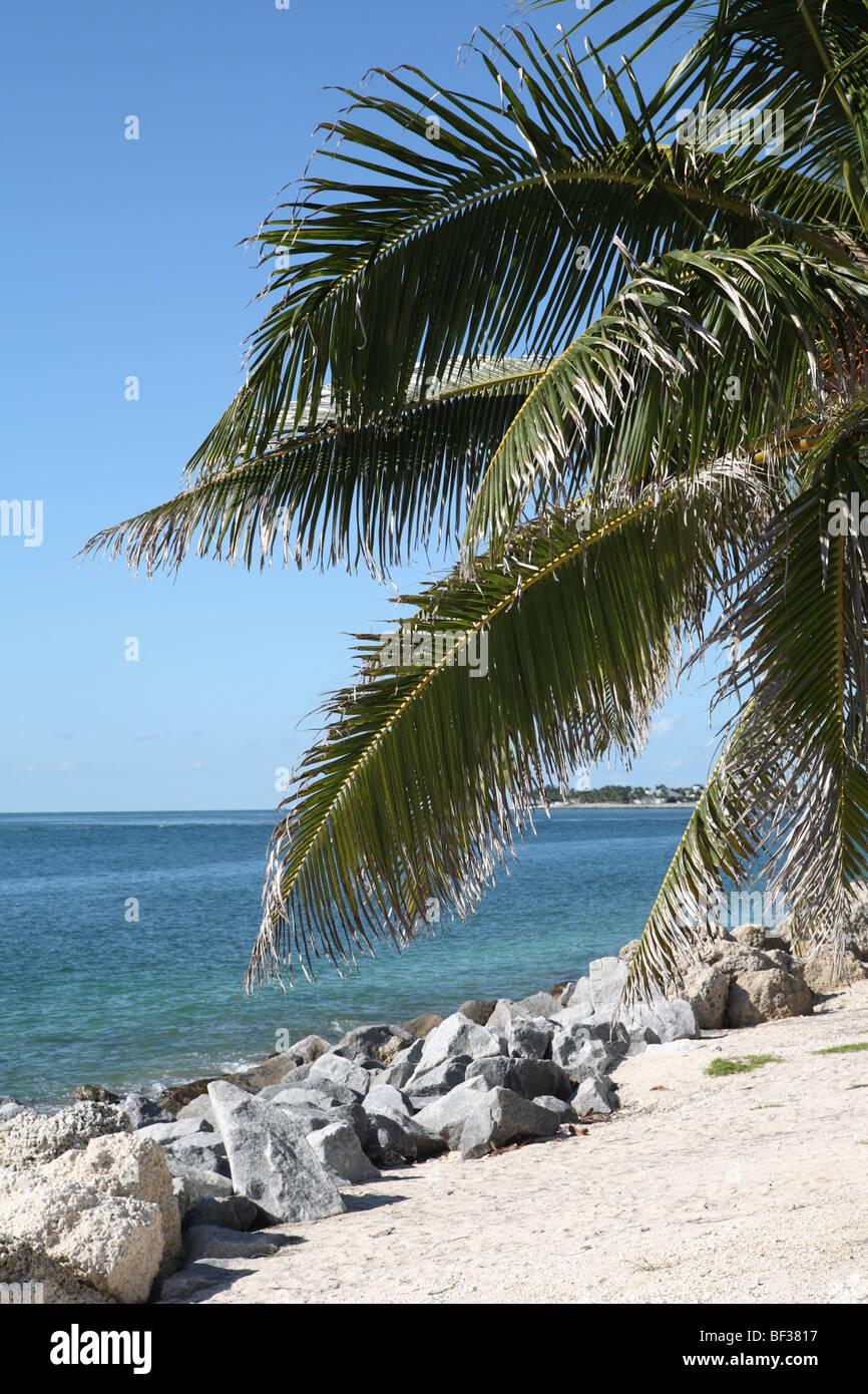 Palm Tree e spiaggia Immagini Stock